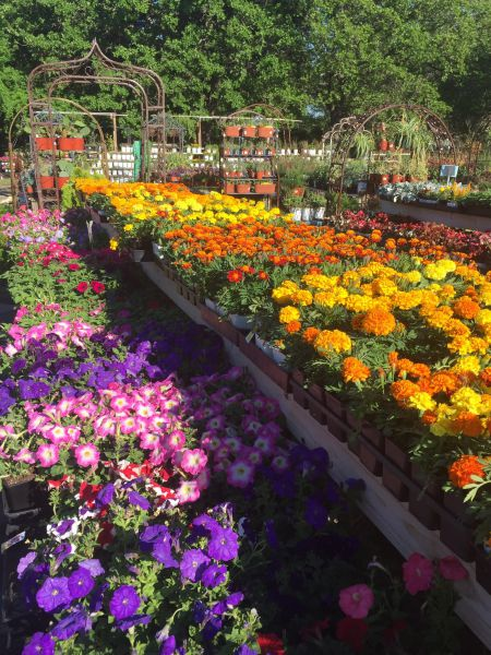 Our Plants Are Provided By Local Texas Nurseries Which Gives A Superior Quality And Adaptability To